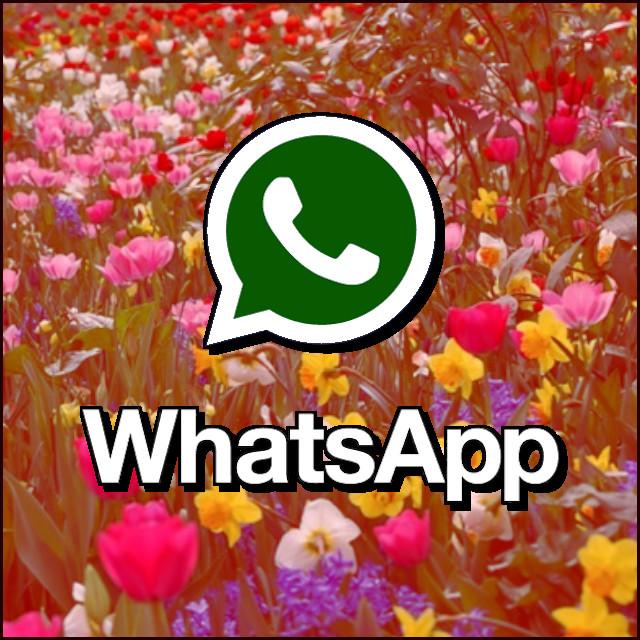 WhatsApp (Flores)