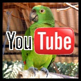 youtube green parrot