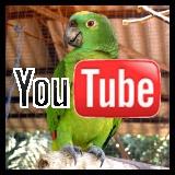 youtube green parrot