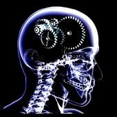 cerebro engranaje