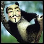 el panda anonymous