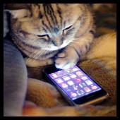 Gato y iPhone